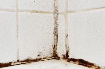 Toxic Mold Injuries